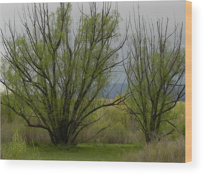 Trees Wood Print featuring the photograph New and Green by Adrienne Petterson