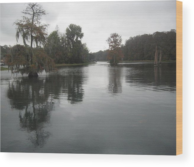 Landscape River Photograph Trees Wood Print featuring the photograph Overcast on the Rainbow River by Warren Thompson
