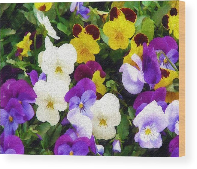 Pansies Wood Print featuring the photograph Pansies by Sandy MacGowan
