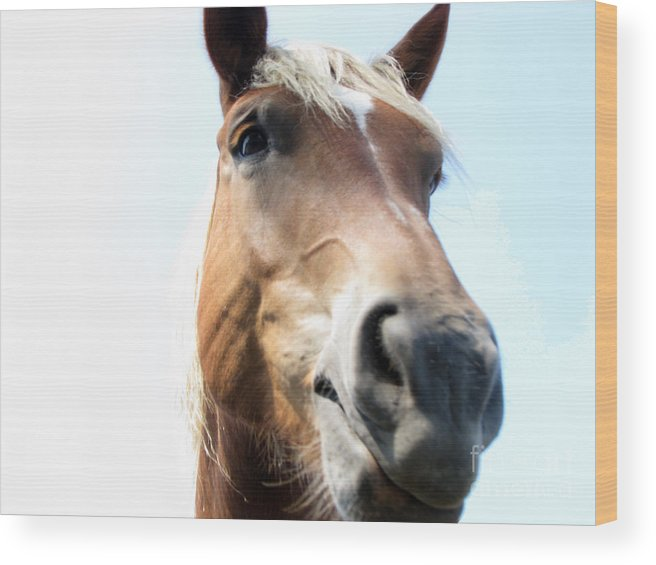Horse Wood Print featuring the photograph Really by Amanda Barcon