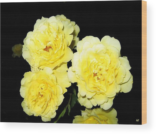 Roses Wood Print featuring the photograph Roses 11 by Will Borden