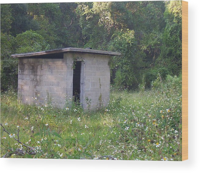 Nature Wood Print featuring the photograph Shed The Old by Stephanie Richards