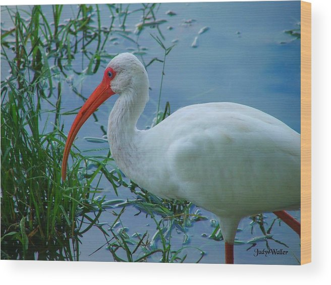 Bird Wood Print featuring the photograph Side Profile by Judy Waller