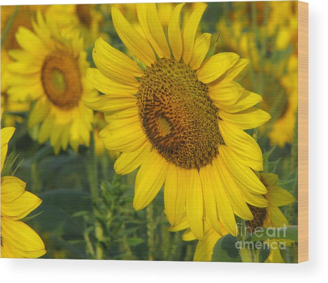 Sunflowers Wood Print featuring the photograph Sunflower series by Amanda Barcon