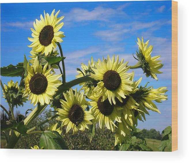 Flowers Wood Print featuring the photograph The Last of Summer by Steve Karol