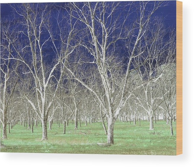Pecan Wood Print featuring the photograph The Pecan Grove by Judy Waller