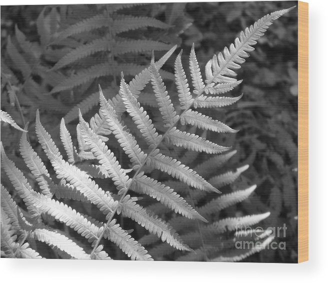 Black And White Wood Print featuring the photograph Tilted Fern by Stephanie Richards