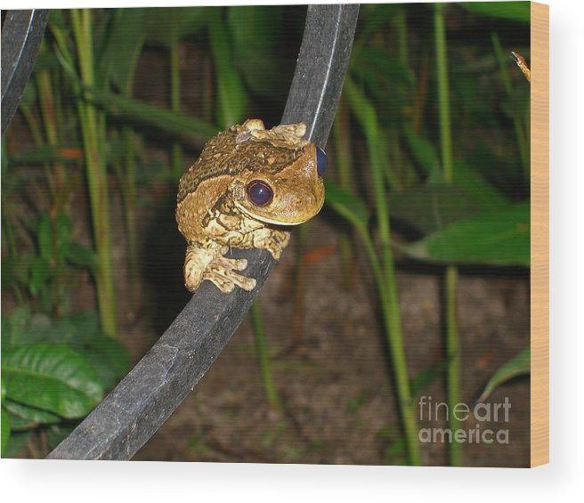 Tree Wood Print featuring the photograph TreeFrog by Jim Thomson