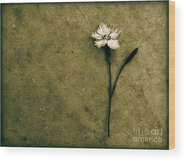 Dipasquale Wood Print featuring the photograph Will you stay with me Will you be my love by Dana DiPasquale