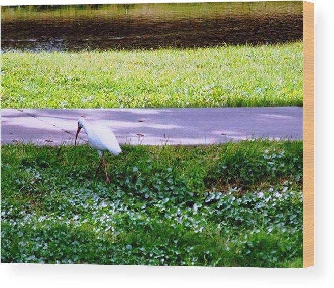 Bird Wood Print featuring the photograph Woways Me by Rana Adamchick