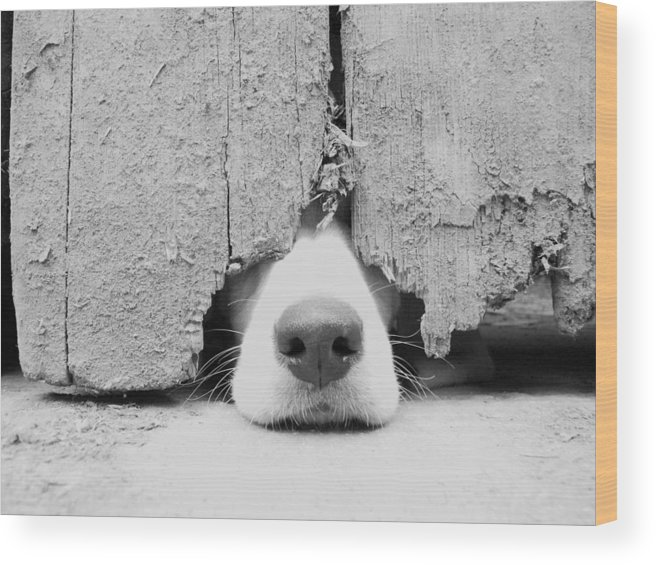 Pets Wood Print featuring the photograph Anyone Out There by By Jake P Johnson