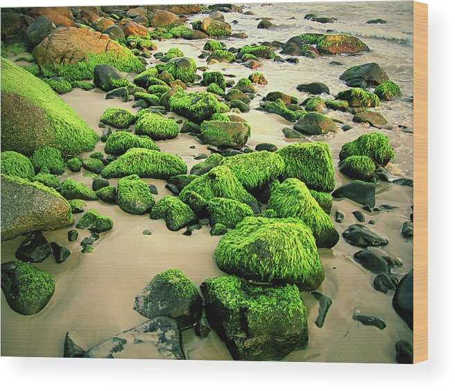 Tranquility Wood Print featuring the photograph Beach Rocks Covered With Seaweed by Andre Bernardo