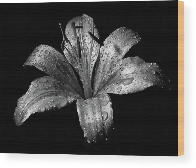Black Background Wood Print featuring the photograph Collection by Photograph By Ryan Brady-toomey