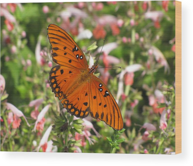 Natural Pattern Wood Print featuring the photograph Gulf Fritillary Aka Passion Butterfly by Daniela Duncan