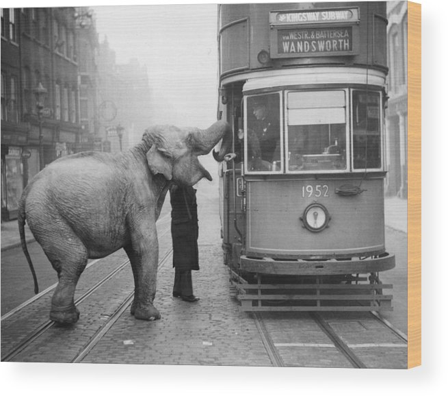 1930-1939 Wood Print featuring the photograph Hungry Elephant by Fox Photos