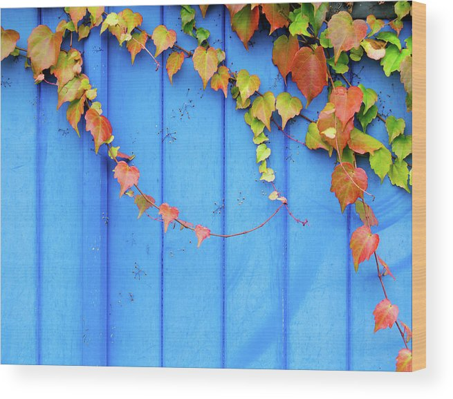 Architectural Feature Wood Print featuring the photograph Ivy On The Door by Zianlob