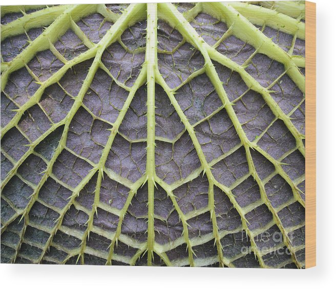 Flora Wood Print featuring the photograph Leaf Underside With Stable Construction by Wilm Ihlenfeld
