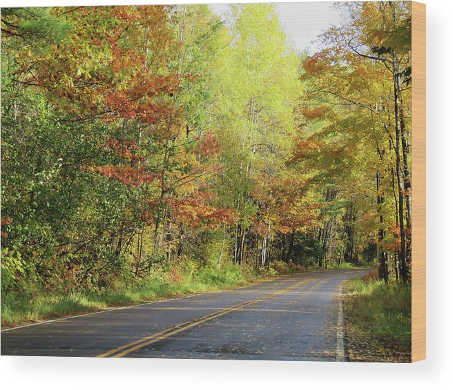 Jay Cooke State Park Wood Print featuring the photograph the Long and Winding Road by Alison Gimpel