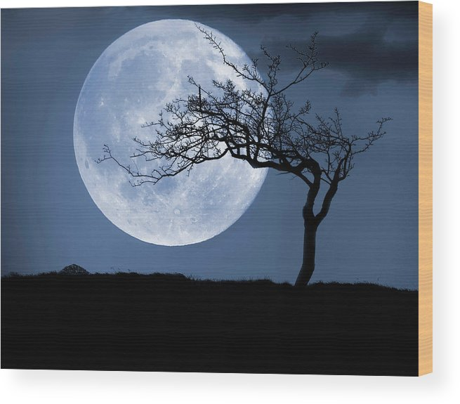 Scenics Wood Print featuring the photograph Treelight by Victor Walsh Photography