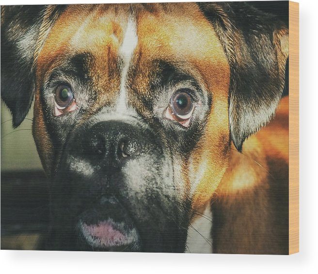 Dog Wood Print featuring the photograph Where'd Everybody Go by CWinslow Shafer