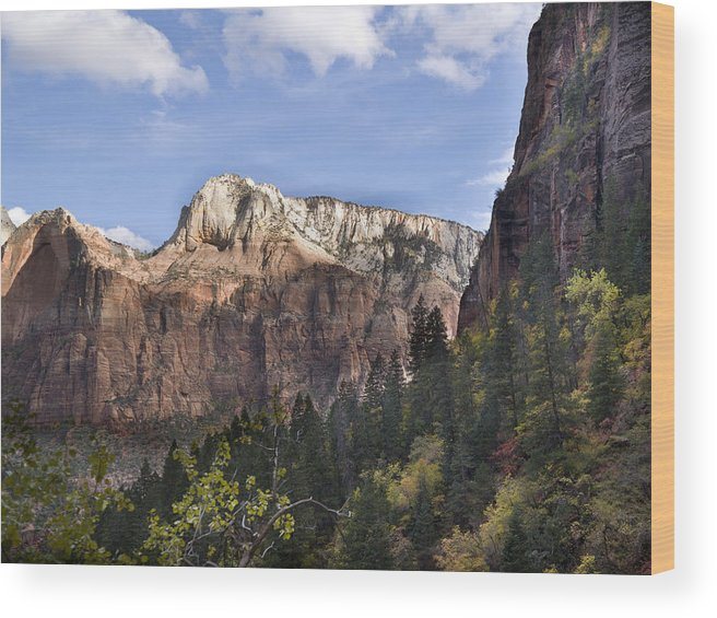 Shadow Wood Print featuring the photograph Trees in Zion National Park by Fotosearch
