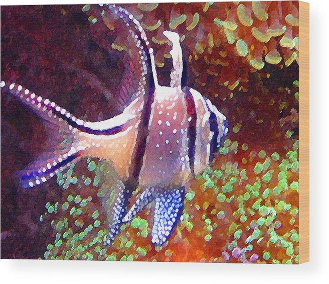 Fish Wood Print featuring the painting Banggai Cardinalfish by Amy Vangsgard