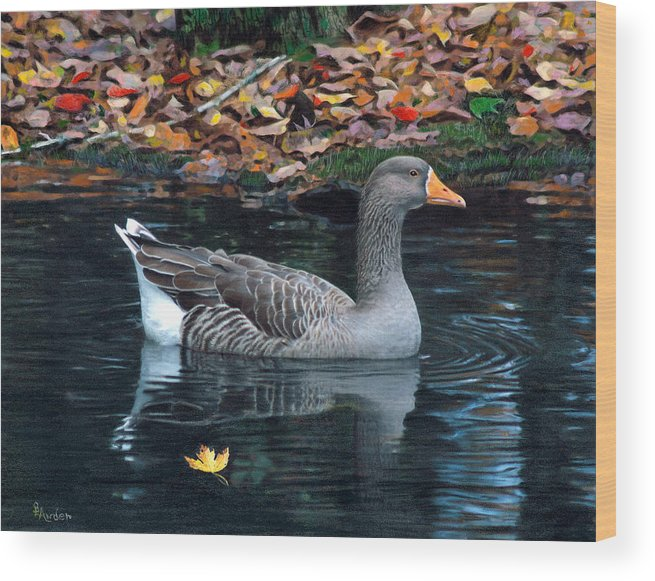 Bird Wood Print featuring the drawing Great White-fronted Goose by Brent Ander
