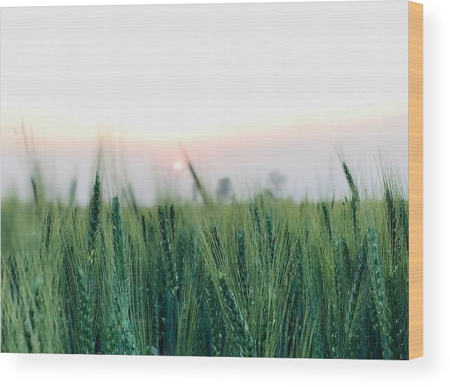 Lanscape Wood Print featuring the photograph Greenery by Prashant Dalal