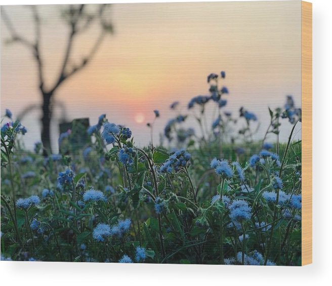 Flowers Wood Print featuring the photograph Sunset Behind Flowers by Prashant Dalal