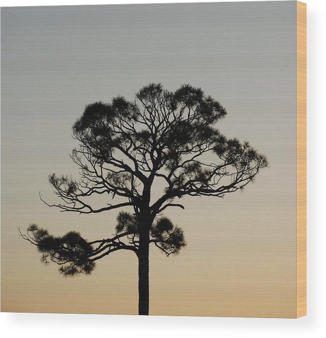 Tree Wood Print featuring the photograph Trees In Sunset by Rob Hans