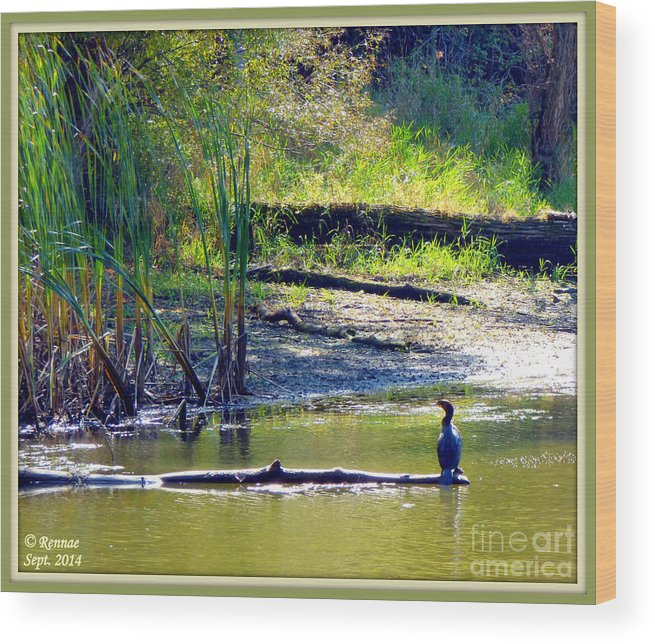 Bird Wood Print featuring the photograph Afternoon View by Rennae Christman