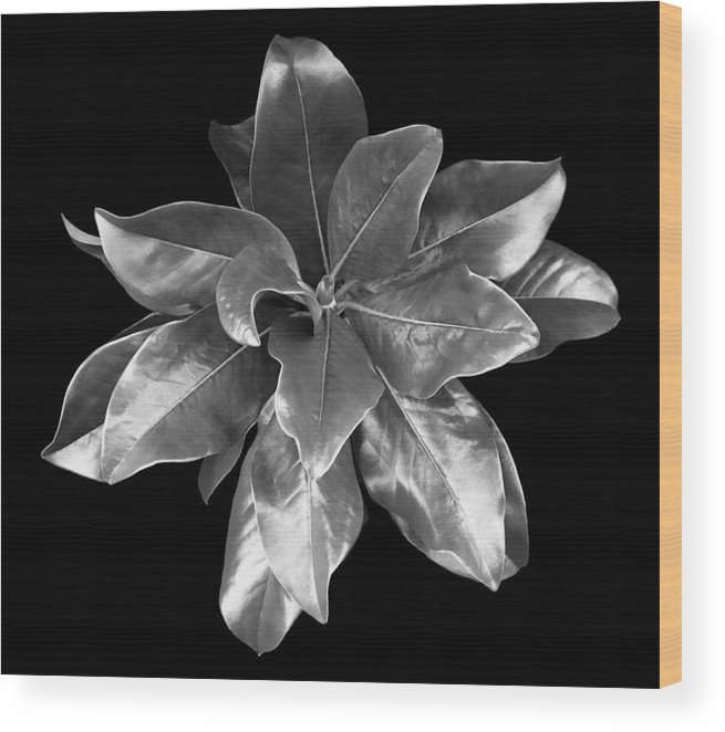 Magnolia Wood Print featuring the photograph Magnolia Tree Leaves by Marilyn Hunt