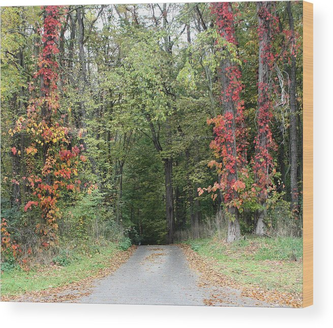 Michigan Wood Print featuring the photograph Michigan's Gateway to Fall by Ann Marie Chaffin