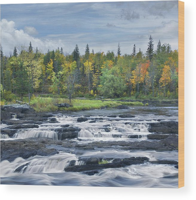 533812 Wood Print featuring the photograph St Louis River Jay Cooke State Park by Tim Fitzharris