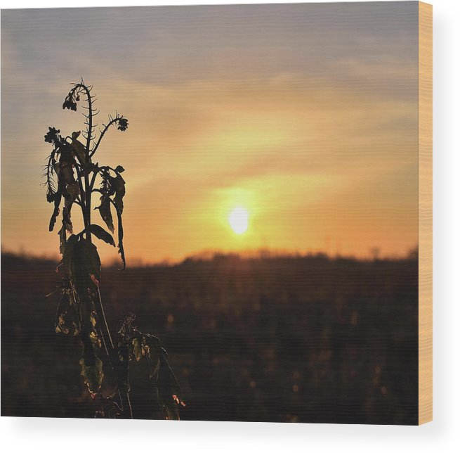 Sonnenuntergang Blume Flowwer Sky Himmel Wood Print featuring the photograph Sonnenuntergang by Scimitarable