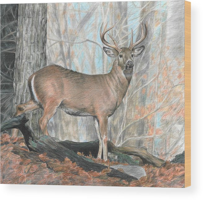 Deer Wood Print featuring the drawing Whitetail Buck by Carla Kurt