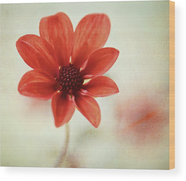 Orange Color Wood Print featuring the photograph Pretty Orange Flower by Captured By Karen Photography