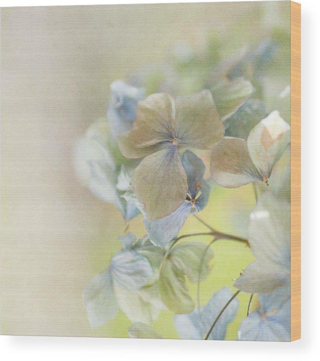 Hydrangea Wood Print featuring the photograph Hydrangea by Jill Ferry