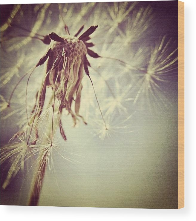 Wish Wood Print featuring the photograph #mgmarts #dandelion #makeawish #wish by Marianna Mills