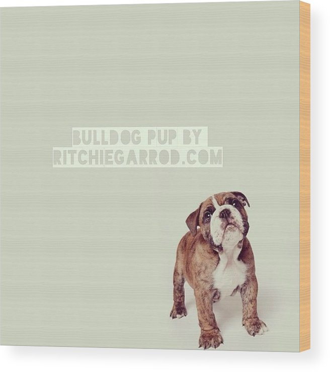 Wood Print featuring the photograph 3rd Pup by Ritchie Garrod