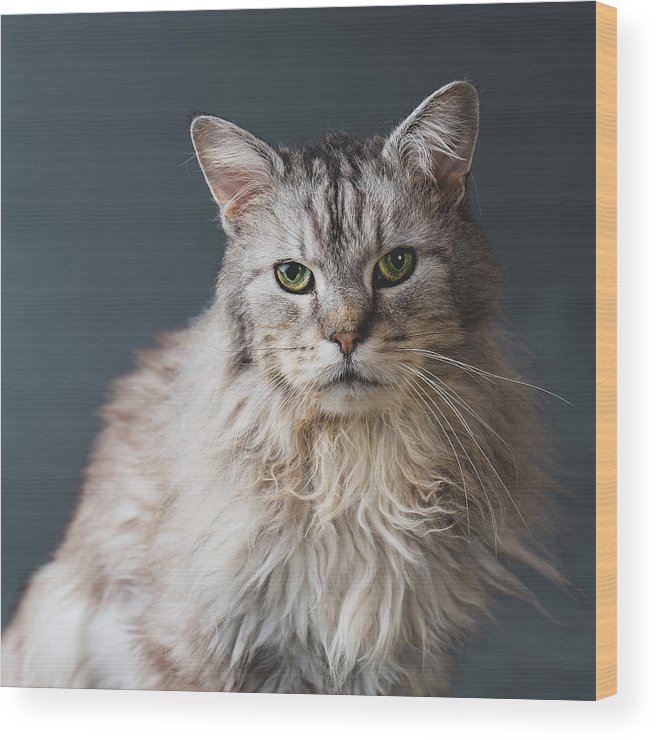 Pets Wood Print featuring the photograph Fortunate Tails by Matt Porteous