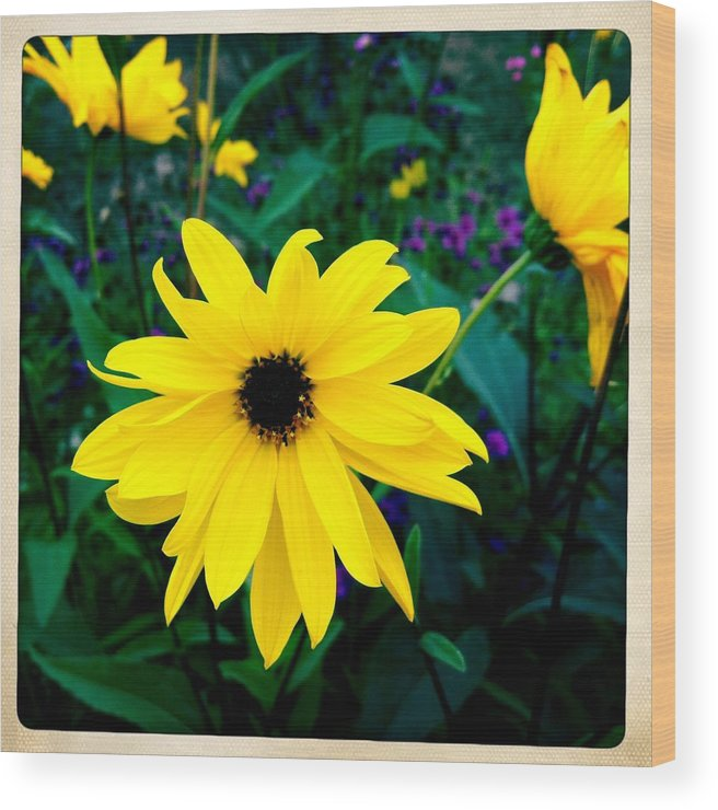 Flower Wood Print featuring the photograph Beautiful yellow flower by Matthias Hauser