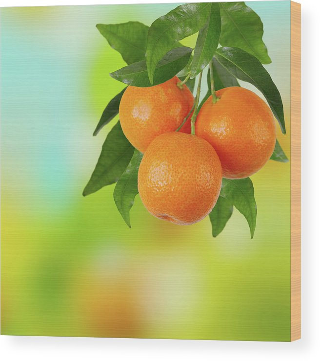 Hanging Wood Print featuring the photograph Branch Of Tangerines by Sashahaltam