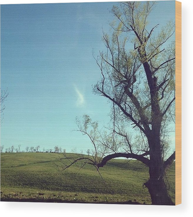 Blue Wood Print featuring the photograph #country #countryside #tree #bluesky by Amber Campanaro