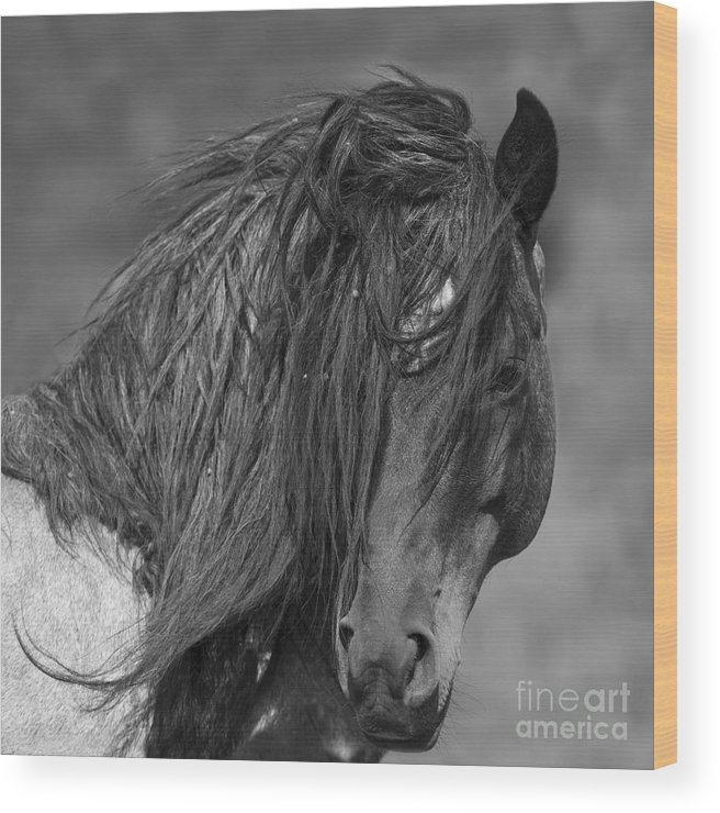 Mustang Wood Print featuring the photograph Freedom Close Up by Carol Walker