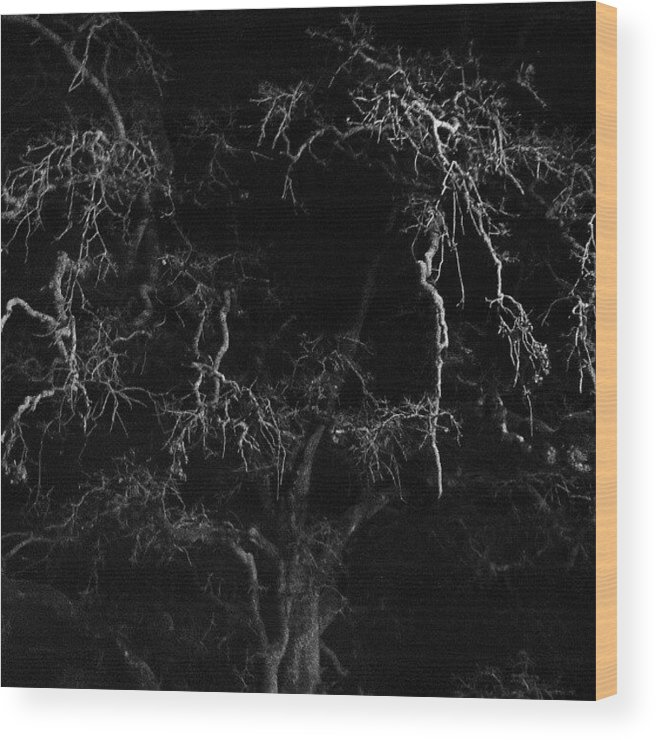 Shadows Wood Print featuring the photograph Gnarly Night Oak by CML Brown