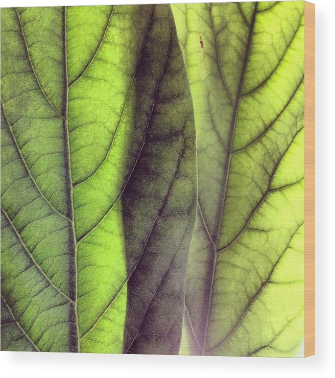 Leaf Wood Print featuring the photograph Leaf Abstract by Christy Beckwith