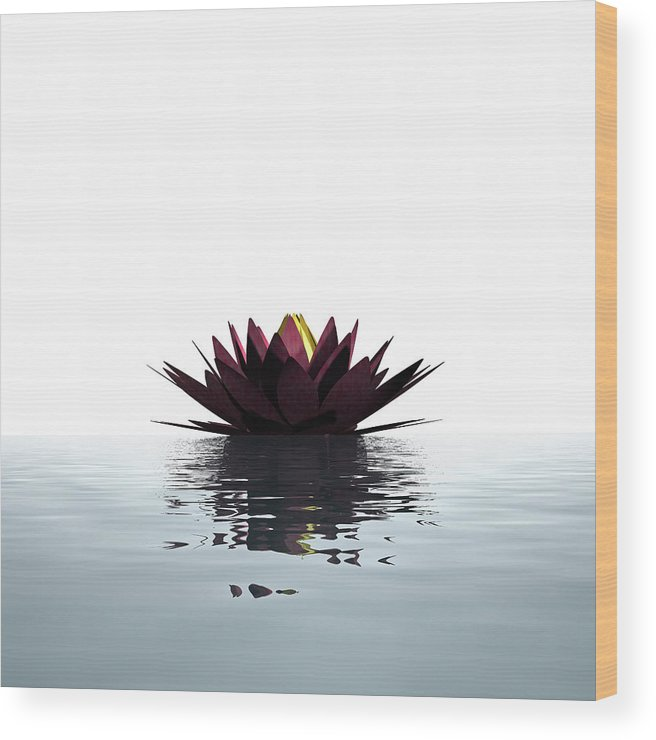 White Background Wood Print featuring the photograph Lotus Flower Floating On The Water by Artpartner-images