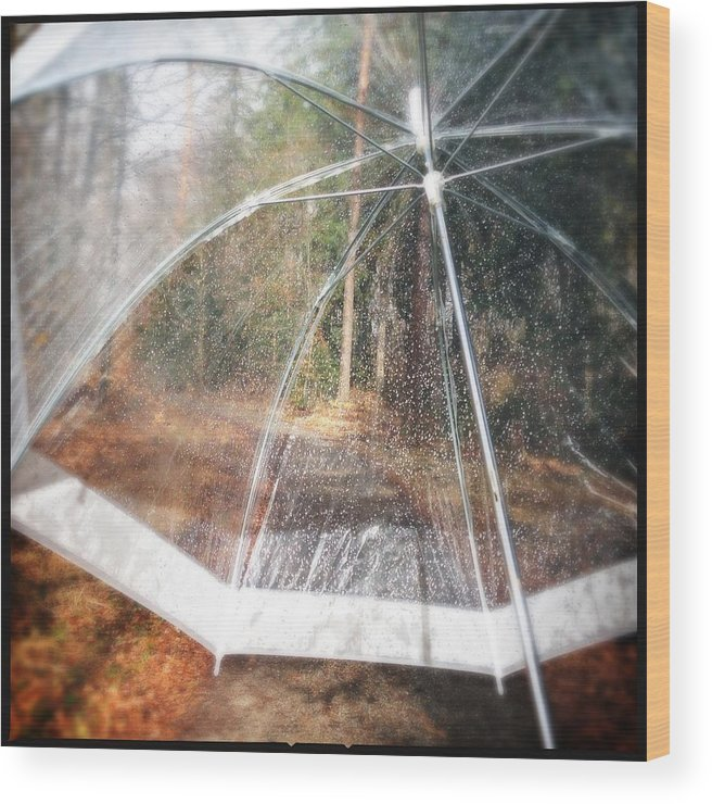 Umbrella Wood Print featuring the photograph Open umbrella with water drops in the forest by Matthias Hauser