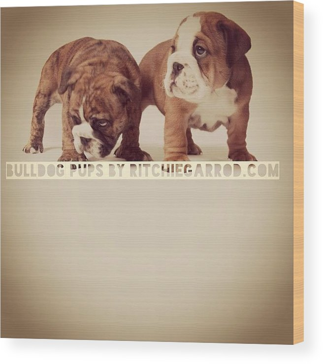 Wood Print featuring the photograph Pups by Ritchie Garrod